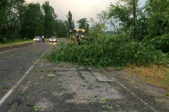 Порывистый ветер повалил деревья на автомобильных дорогах Аргудан-Александровская и Прохладный-Эльхотово